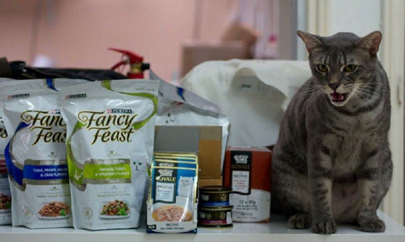 Is-Fancy-Feast-good-for-cats-1