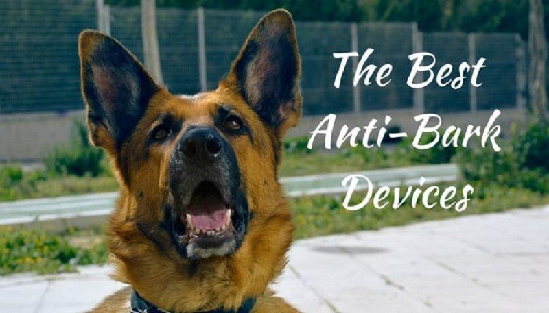 best-anti-bark-device-7