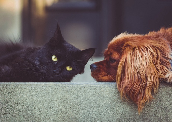 Cats-and-Dogs-Can-Get-Along-2