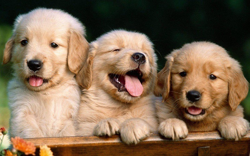 best-dog-food-for-lab-puppies-7