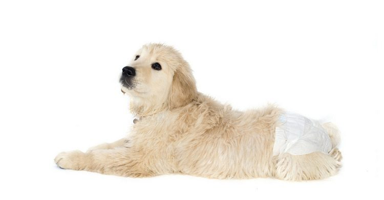 How To Keep Dog Diapers From Falling Off