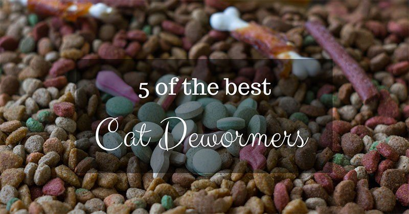 best cat dewormer