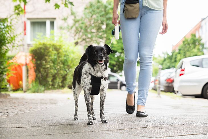 best retractable dog leash brands