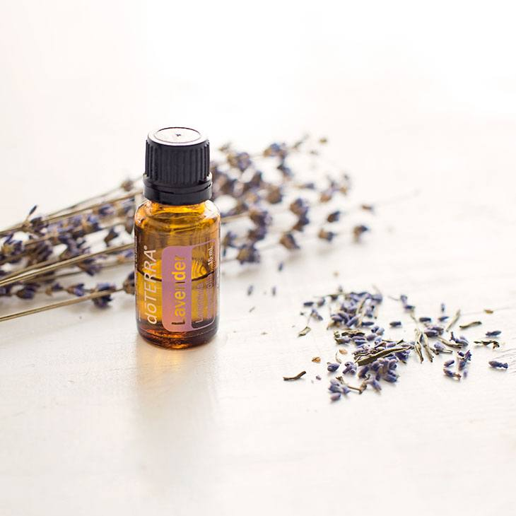 lavender essential oil for dog anxiety