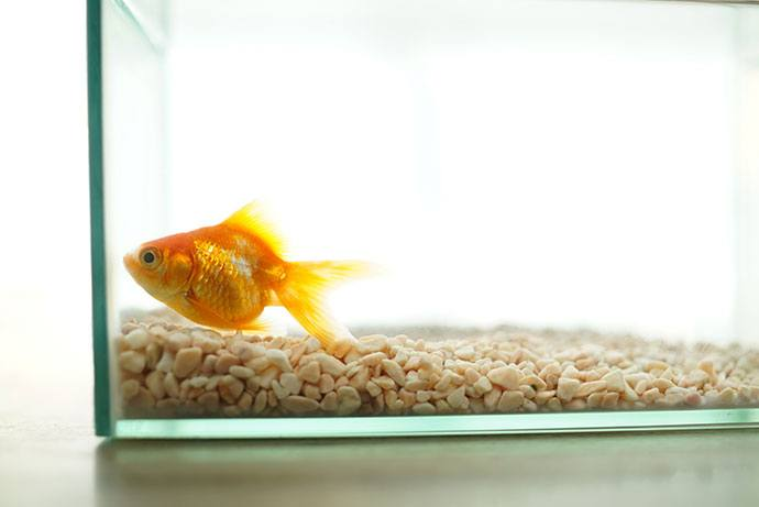 best food for goldfish and koi