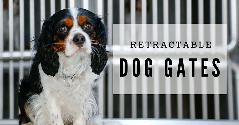 retractable dog gates