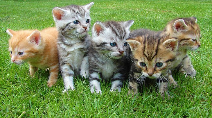 best kitten food reviews