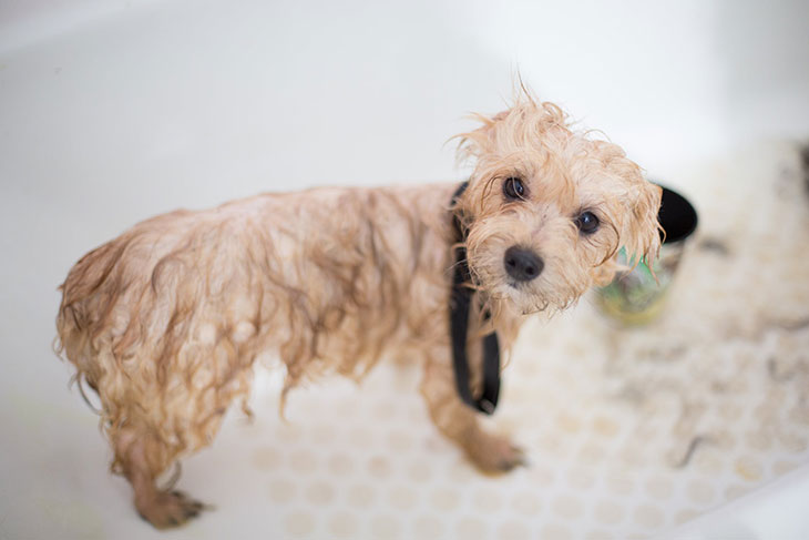 can one use human shampoo on dogs