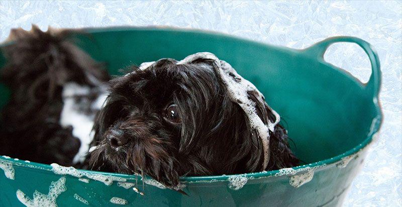 best puppy shampoo