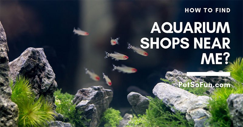 aquarium shops near me