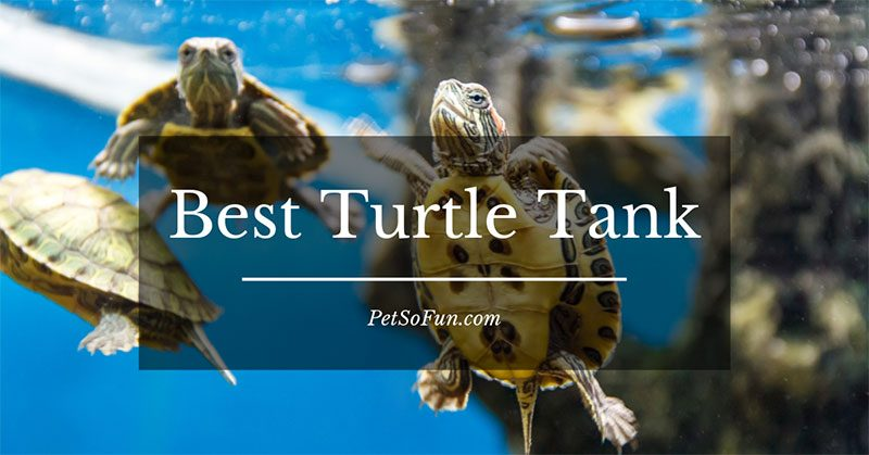 best turtle tank reviews