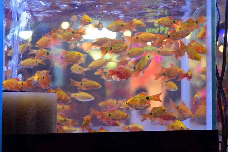 How Can I Find the Best Aquarium Shops Near Me? - Pet So Fun