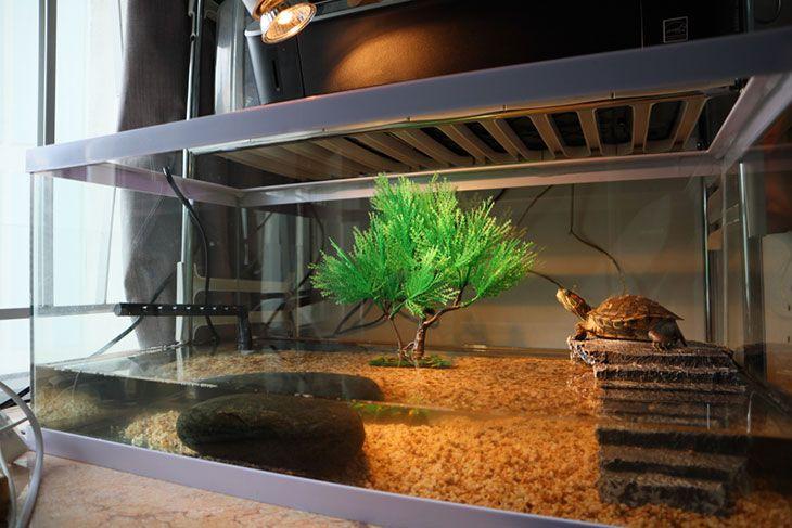 the best turtle tank