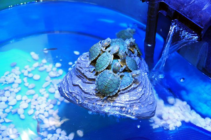 best turtle tank setup