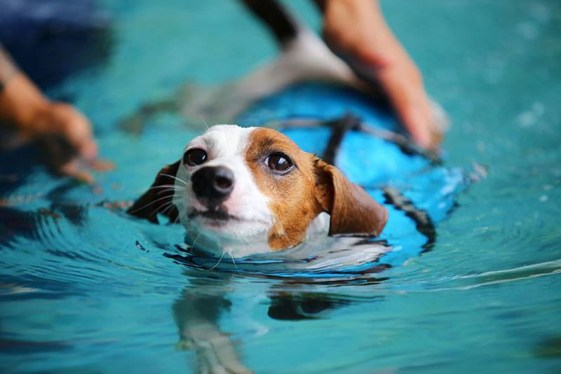 dogs swimming in water