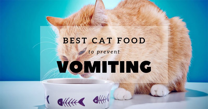 best cat food to prevent vomiting