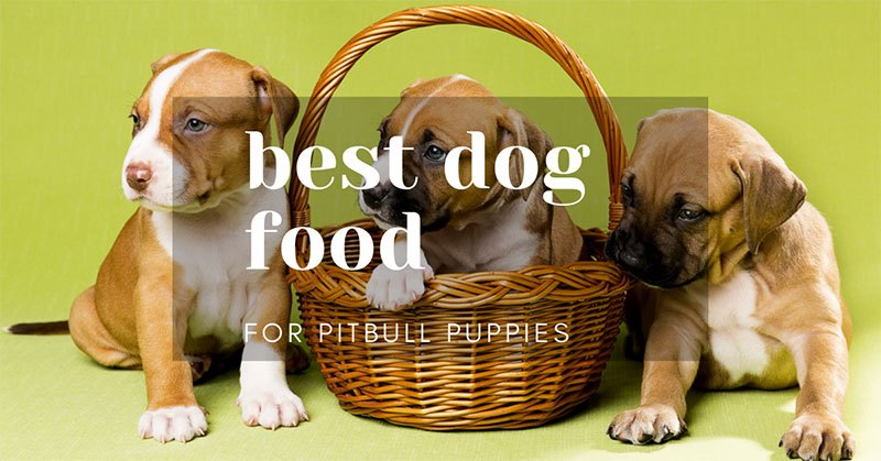best dog food pitbull puppies