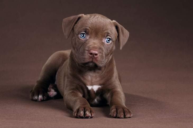 best dog food for pitbull puppies with allergies