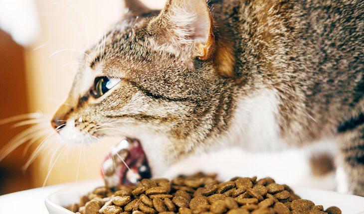 best cat food to prevent vomiting uk