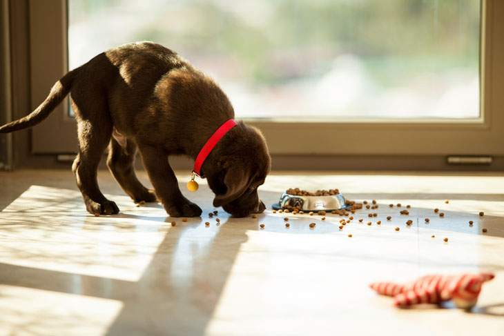 best dry dog food for liver disease
