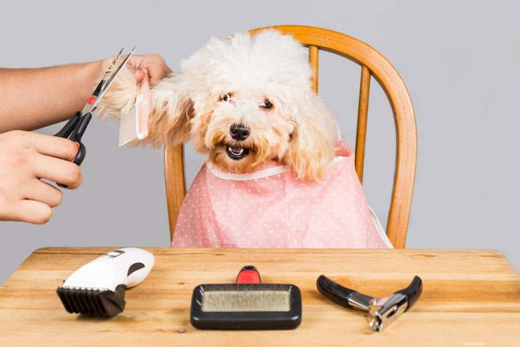 best dog clippers for poodle hair