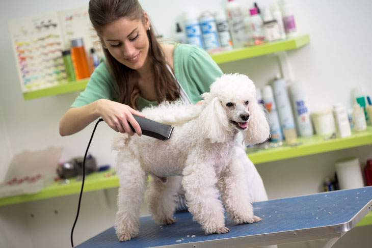 best pet clippers for poodles