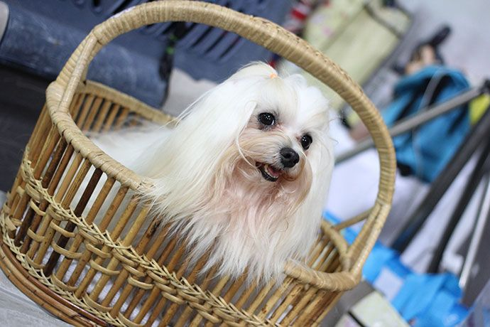 best dog hair clippers for shih tzu