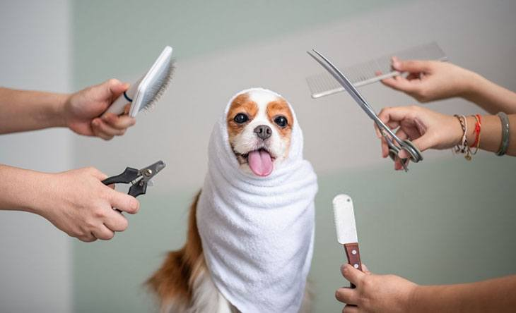 can u cut dog's hair with human clippers