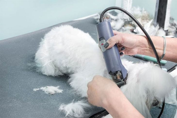 best dog clippers for a maltese