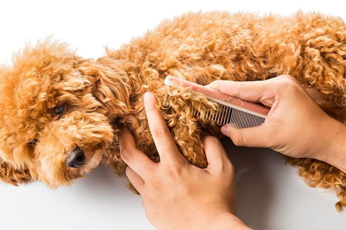 best dog grooming clippers for doodles