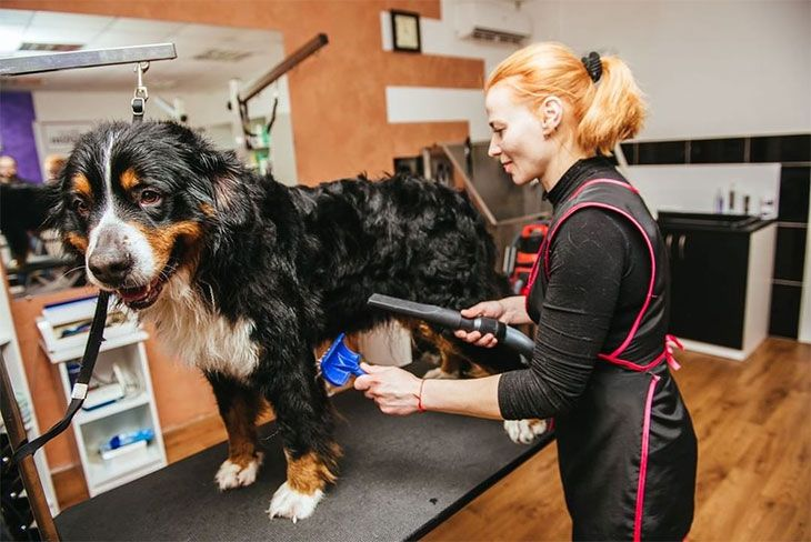 best dog grooming clippers reviews