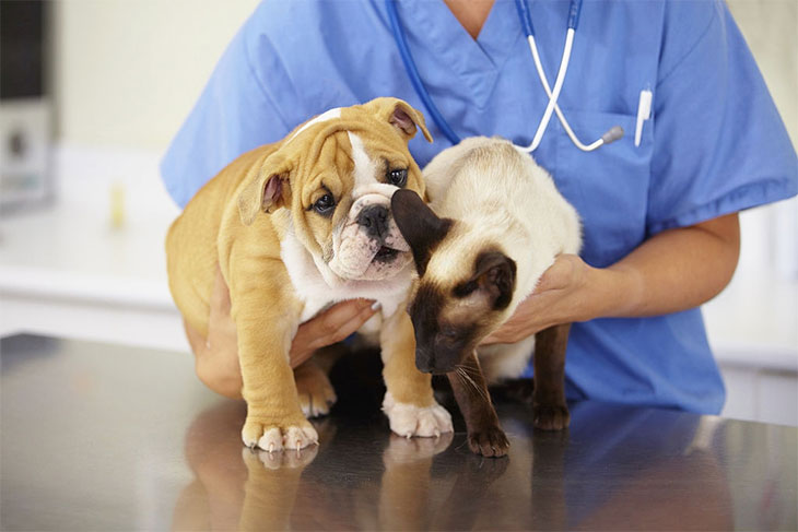 what is the best dog food for kidney problems