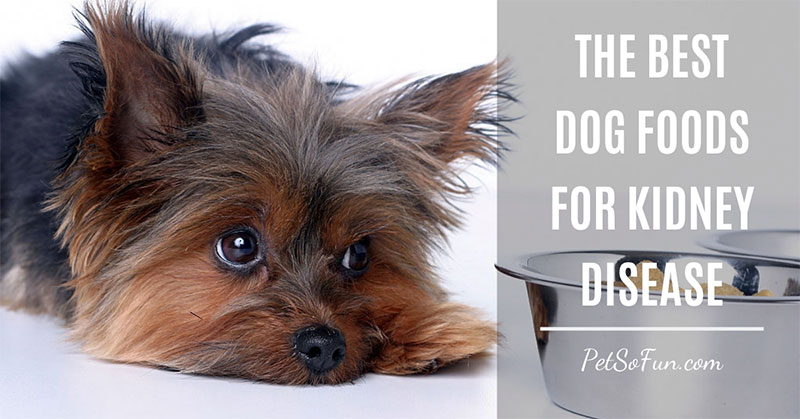 best dog food for kidney disease