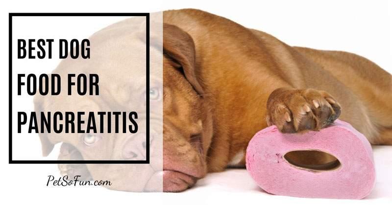best dog food for pancreatitis