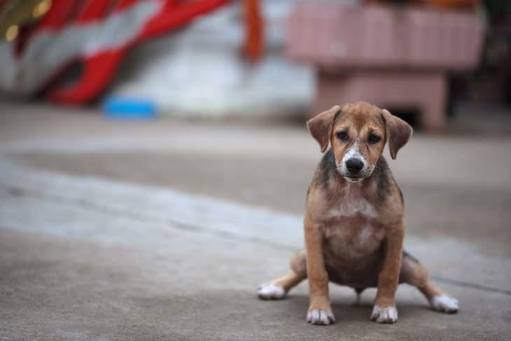 urinary care dog food alternatives