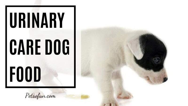 urinary care dog food