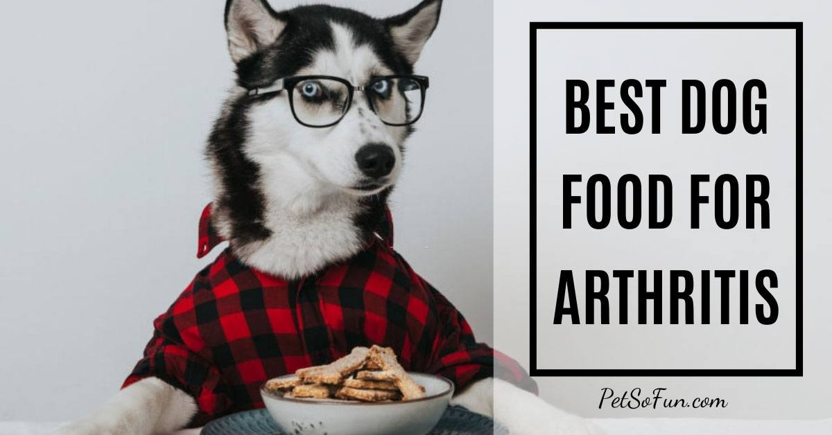 Best Dog Food for Arthritis