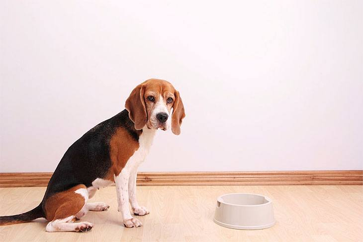 best dog food for weight loss and sensitive skin