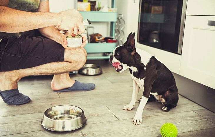 best dog food for weight loss for large dogs