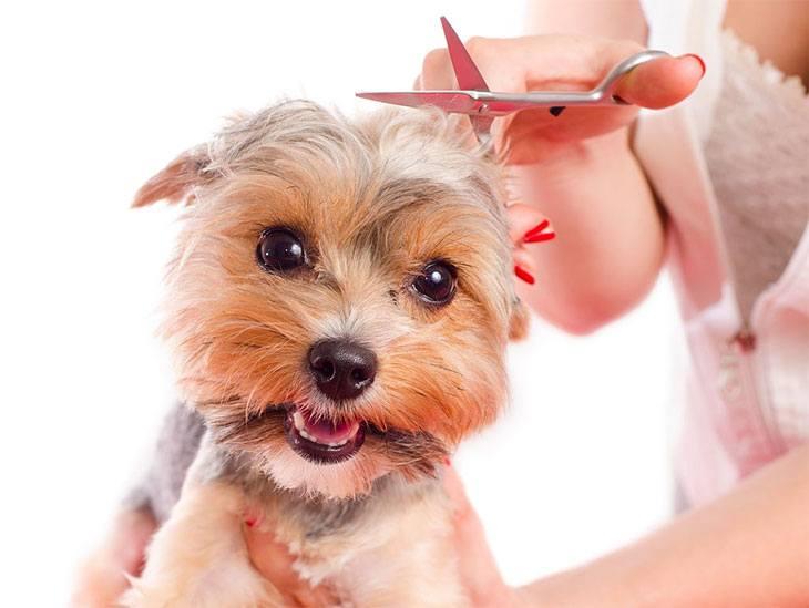 best dog grooming scissors reviews
