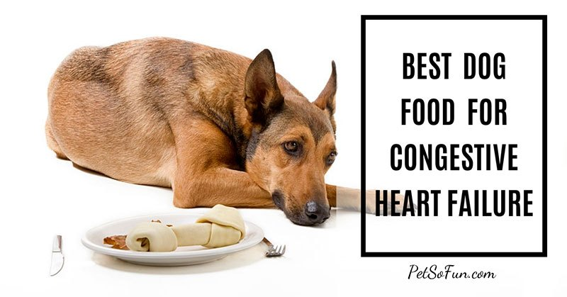 best dog food for congestive heart failure