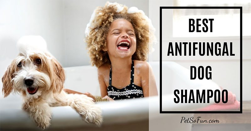 best antifungal dog shampoo